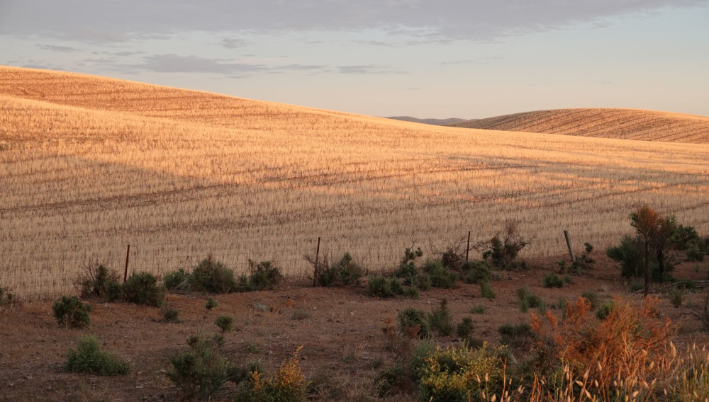 South Australian fields after harvest (Photo: E. Hebeker)